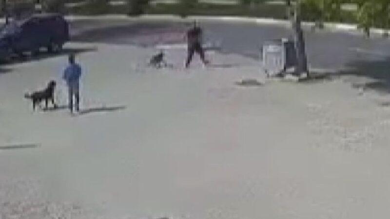 Vicdansız! Sokak köpeğini silahla öldürdü… 10 bin TL ile serbest