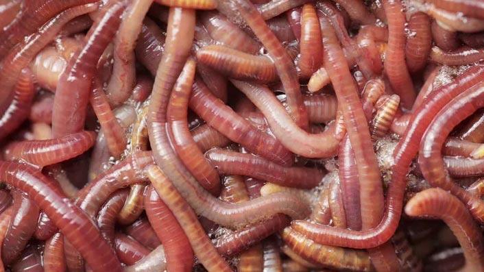 Bilim insanları uyardı: Kurtçuklarla beslenmeye hazır olun