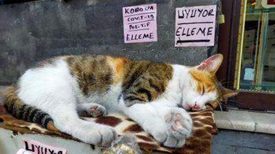 Bursa'da kedisi uyandırılmasın diye bu yazıyı astı