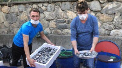 Bursa'da yavru hamsi isyanı