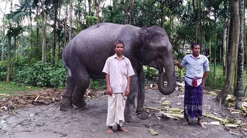 Eşi rüyasında gördü, tarlalarını satıp 20 bin dolara fil aldı