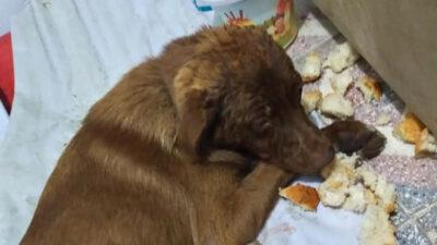 Vicdansızlık! Bursa'da köpeğe çarpıp kaçtı
