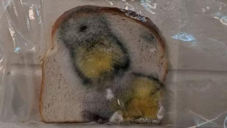 Ekmekle deney yaptı herkes onu konuşuyor