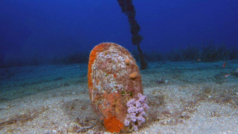 Akdeniz'de parazit tehdidi! Sayıları giderek azalıyor…