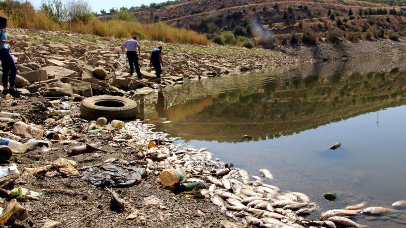 Gölette sular çekildi, binlerce balık telef oldu