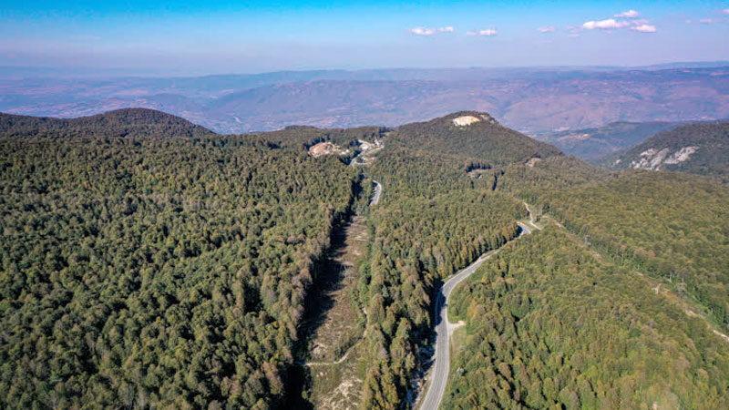 Bursa'daki kayın ormanı tırtıl istilasından böyle kurtarıldı