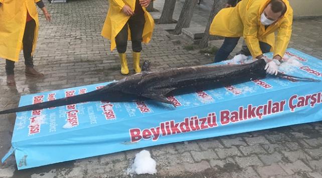 Marmara Denizi'nde yakalandı! 3 metre boyunda…
