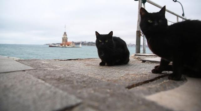 Saraylardan sokaklara 'kara kediler'in hikayesi