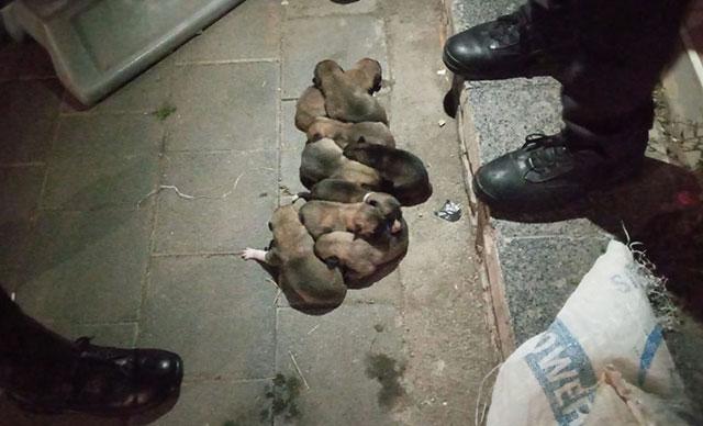 Yavru köpekler çuval içerisinde sokağa atıldı!
