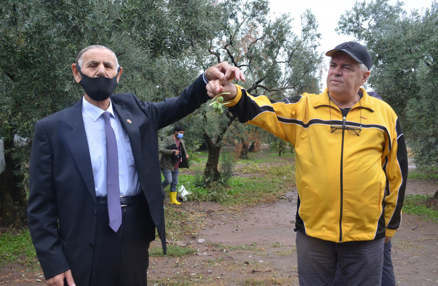 Bursa'da doludan zarar gören zeytinliklerde hasar tespit çalışması yapıldı