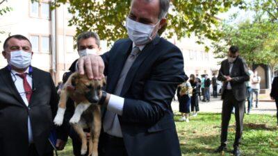 İnegöl Belediyesi okullara köpek sahiplendiriyor