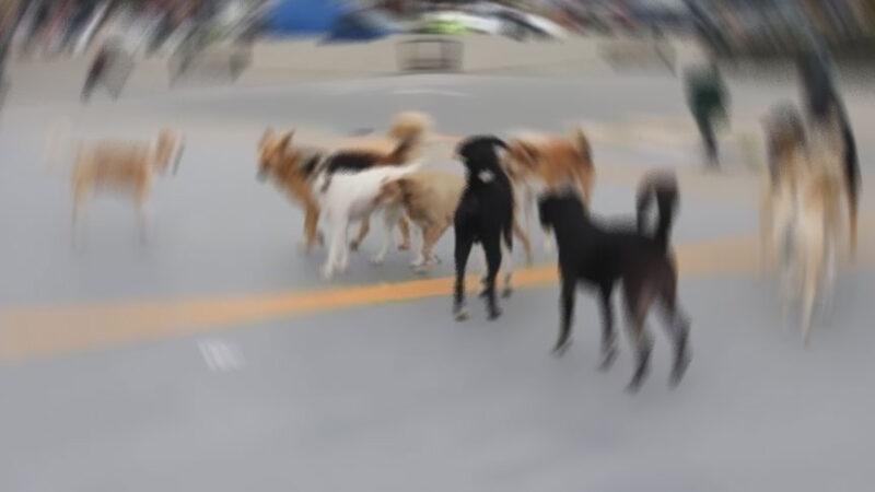 Bursa'da başıboş köpek dehşeti