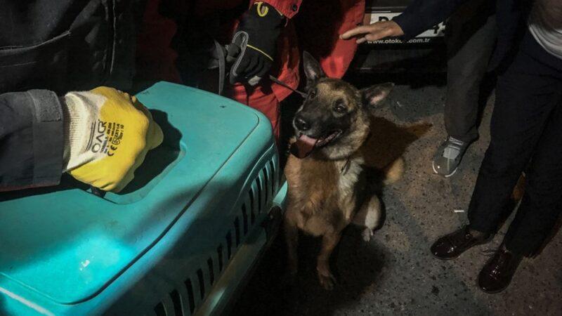 İzmir'de enkazda K-9 köpeği kediyi kurtardı