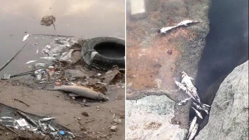 Bursa'da endişelendiren ölümler! Yüzlercesi kıyıya vurdu