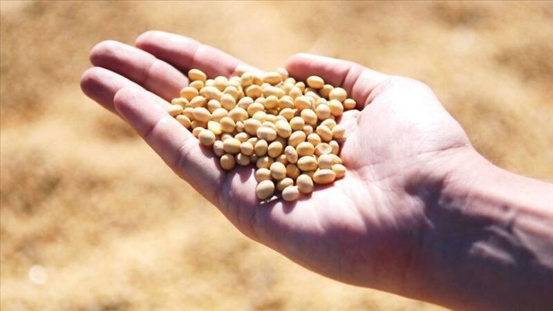 Soya fasulyesi ihracatı 9 ayda yaklaşık 2,5 kat arttı