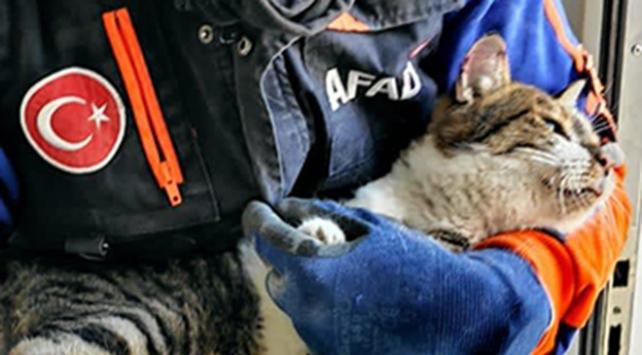 70 saat sonra bir kedi daha kurtarıldı