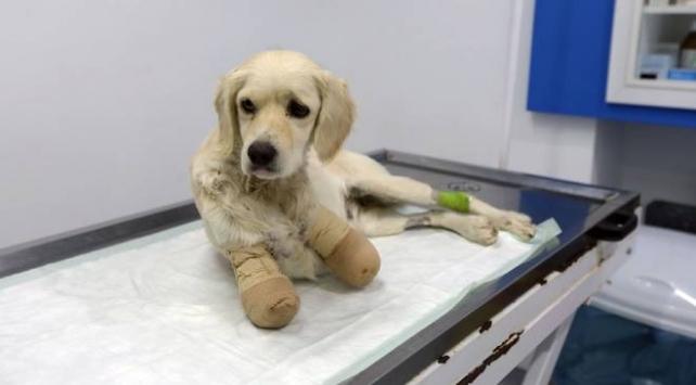 Patileri kesilen köpekle ilgili flaş gelişme