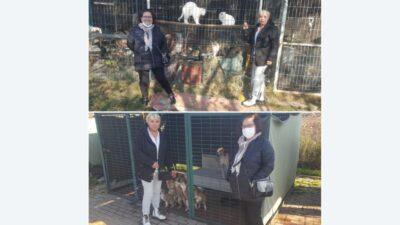 Onların aradığı sevgi… Türkiye'nin en büyük 'gönüllü' hayvan barınağı