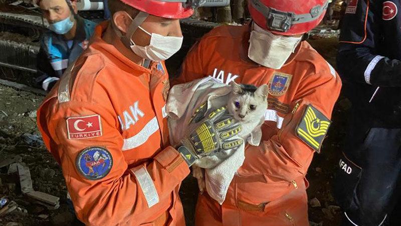 Enkaz altındaki kedi 76 saat sonra kurtarıldı