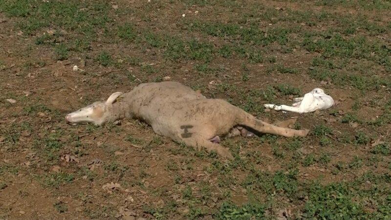 Bursa'da evine gidince gördükleri karşısında şoke oldu! 15 hayvan telef…