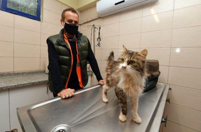 Ünlü şarkıcı İzmir depreminde 90 saat kurtarılan kediyi sahiplendi