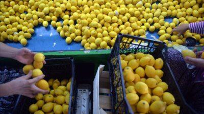 Yeni sezon turunçgil ihracatını limon sırtlıyor