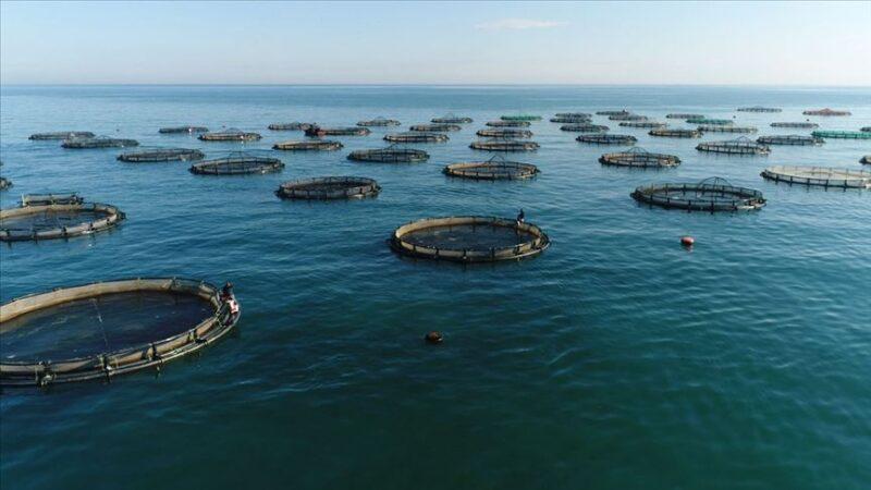 Su ürünleri ihracatında tutar 822 milyon dolara ulaştı