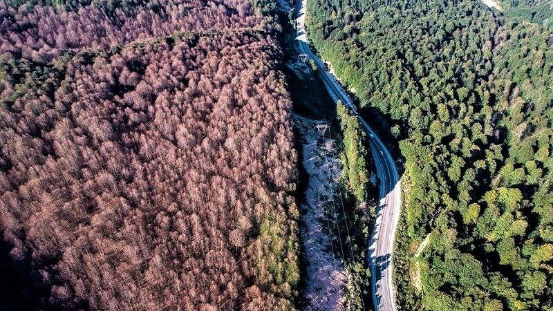 Bursa'da tırtıl istilasından kurtulan orman rengarenk oldu