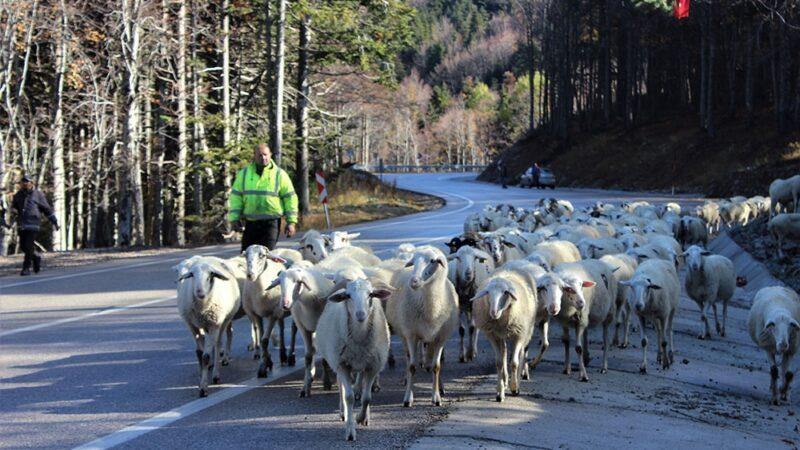 Uludağ'a kar düştü çobanların zorlu yolculuğu başladı