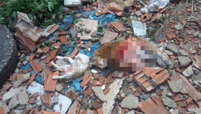 İstanbul'da kedi katliamı
