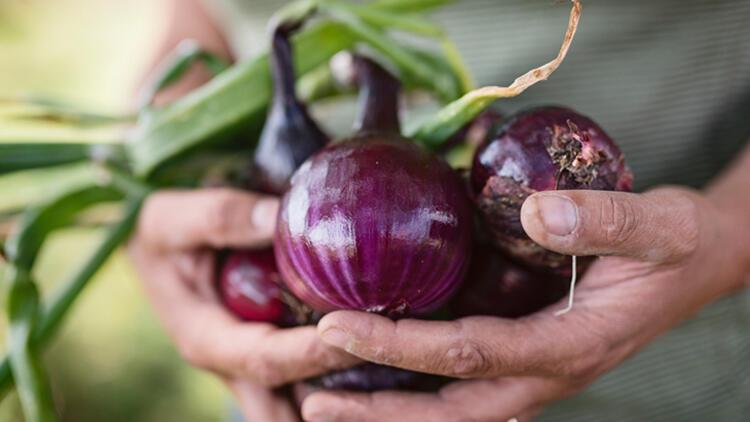 Sık soğan yemenin vücutta yarattığı 7 muhteşem değişim…