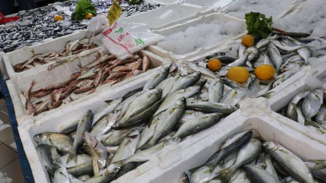 Karadeniz'de sarıkanat bolluğu: Kilosu 25 lira