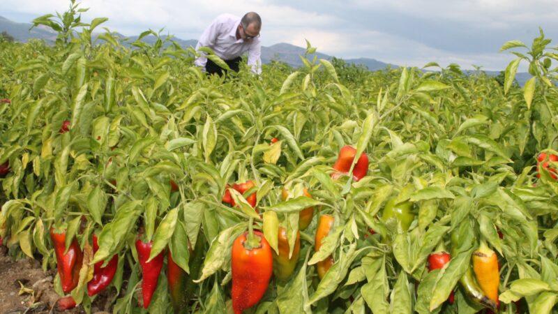 Bursa'nın 'tarım' raporu! İşte 18 yıllık bilanço…
