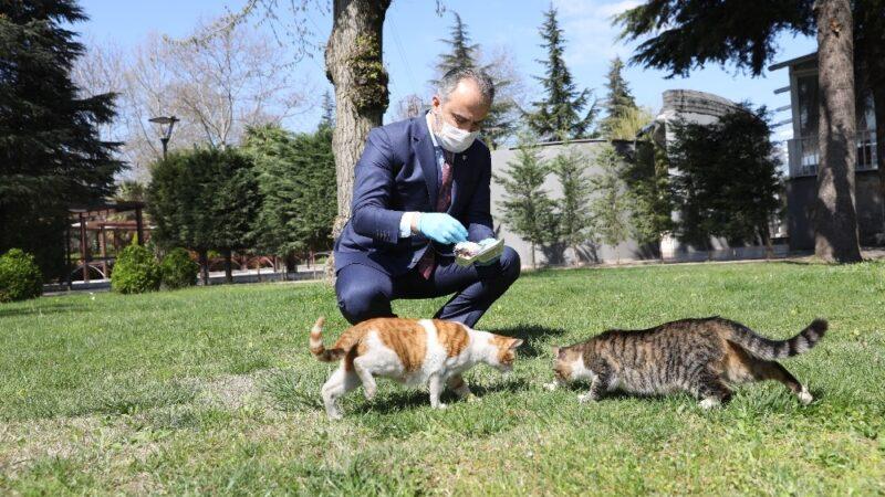 Bursa'da can dostlara 62 ton mama