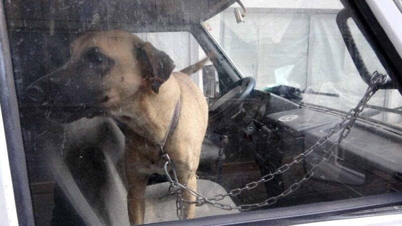 Köpeğini karavanda zincirle bağladı, gazetecilere 'niye çekiyorsunuz' diye saldırdı