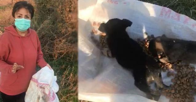Bunun adı vicdansızlık…12 köpeği canlı canlı çuvala koyup ölüme terk ettiler