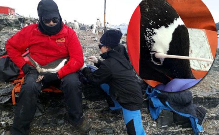 Türk bilim insanı Antarktika seferinde keşfetti: Dünyada henüz tanımlanmamış