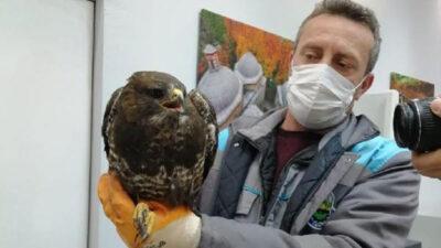 Bursa'da yaralı şahin tedavi altına alındı