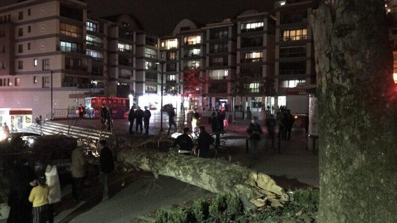 Bursa'da lodos çınar ağacını devirdi