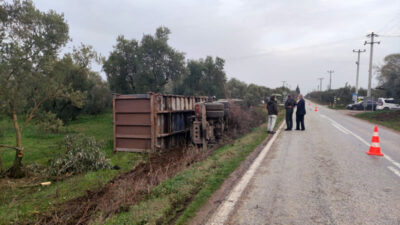 Bursa'da kamyon zeytinliğe devrildi