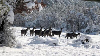 Yer: Bursa… En şanslı geyikler!