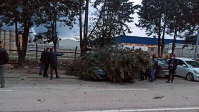 Yer: Bursa… Otomobilin üzerine ağaç devrildi