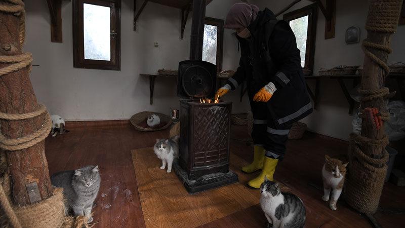 Sahipsiz kedilerin villa keyfi