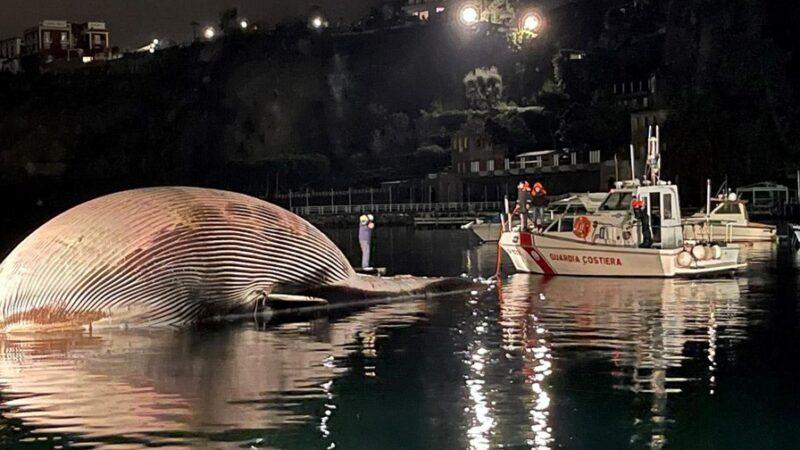 Gözlerinize inanamayacaksınız! Denizden çıktı, ağırlığı 70 ton…