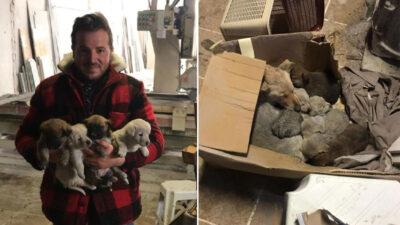 Bursa'da sokak köpeği ile 6 yavrusunu donmaktan kurtarıp sahiplendi