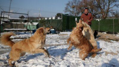 Bursa'da köpeklerin karda oynaması tebessüm ettirdi