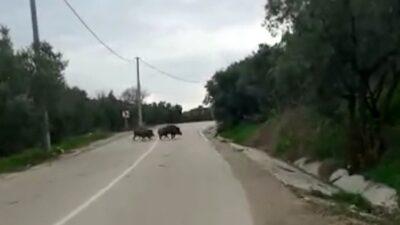 Bursa'da aracıyla ilerlerken aniden karşısına çıktı
