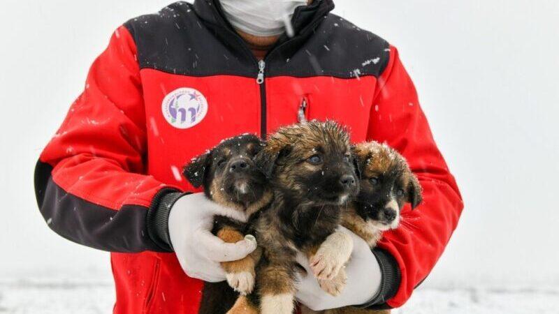 Bursa'da 11 yavru köpek donmaktan son anda kurtarıldı