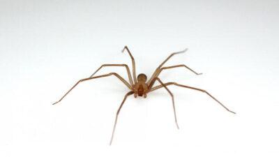 Zehirli örümcekler bastı! İki gün kapatıldı