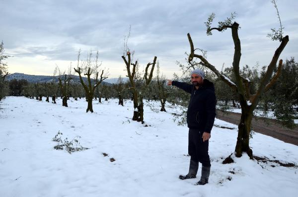 Bursalı çiftçiye 'yalancı bahar' darbesi